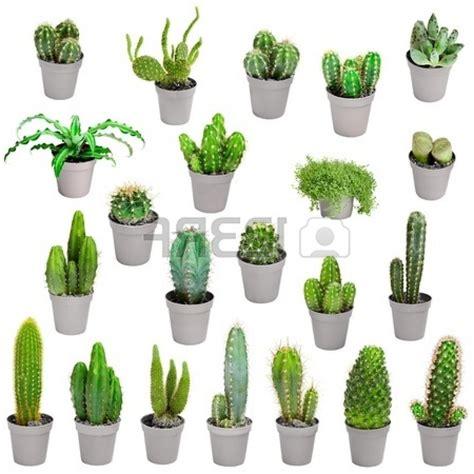 Kaktus Zimmerpflanze by Cactus Houseplants Related Keywords Cactus Houseplants
