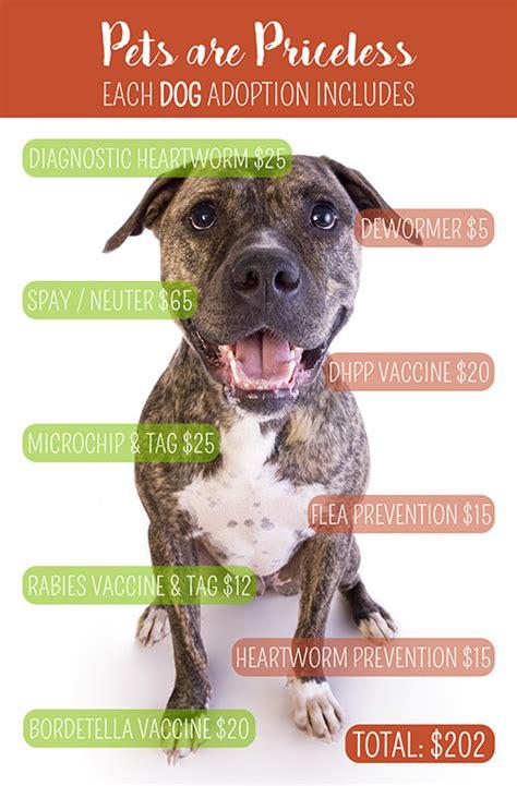 pets alive dogs sapa san antonio pets alive adopt a