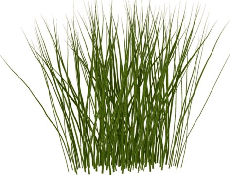 tall grass png    icons  png backgrounds