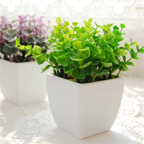 bonsai fiori bianchi acquista all ingrosso eucalyptus bonsai da