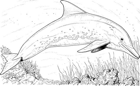 river dolphin coloring page river dolphin coloring pages dolphins coloring pages