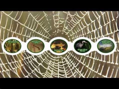 cadenas y redes troficas introduccion cadenas y redes tr 243 ficas la casa por el tejado verde