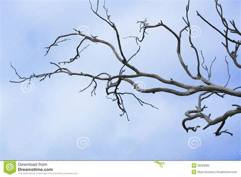 bare branch tree bare tree branches royalty free stock photo image 35263085