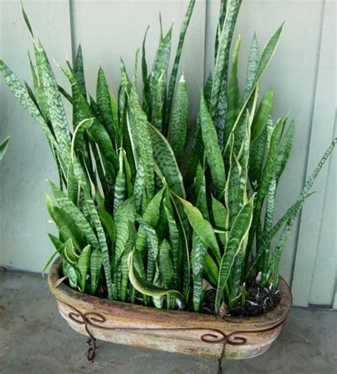 house plants for low light low light indoor plants www garden design me