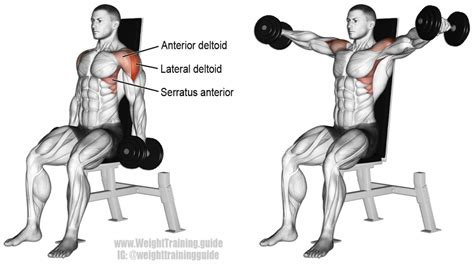 seated shoulder dumbbell press seated dumbbell lateral raise and