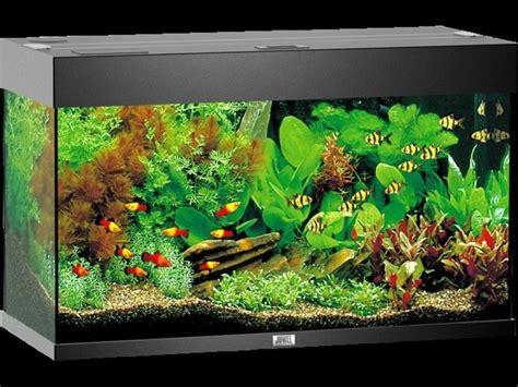 acquario casa acquario in casa accessori per la casa realizzare un