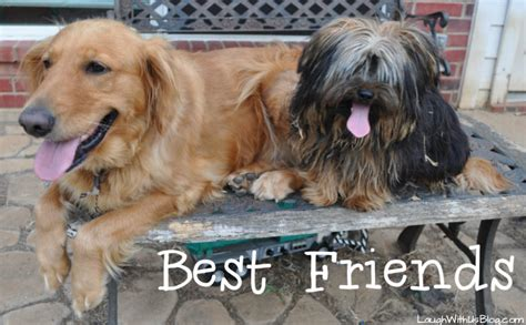yorkie and golden retriever keeping my safe