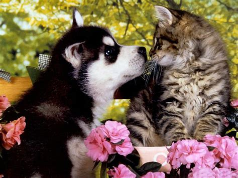 puppy and cat puppies and kittens wallpapers wallpaper cave