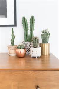 How To Decorate Cactus Indoor » Home Design 2017