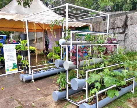 introduction  hydroponics  home