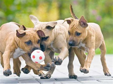 places where you can play with puppies socializing your is key to longevity