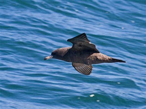oregon seabirds september 2010