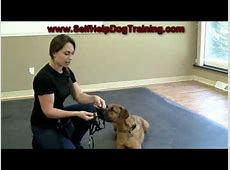 HALTI Harness Ausbildungsgeschirr für Hunde von Company of ... Macs Hundefutter Günstig