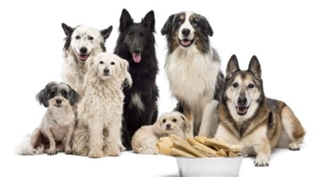 wann sind hunde in der pubertät wie oft muss der hund gef 252 ttert werden ern 228 hrung