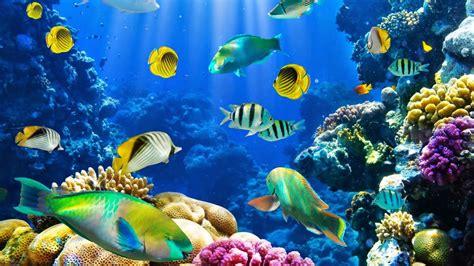 los peces de la peces los peces