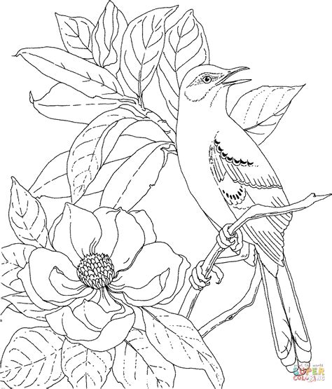 coloring pages of state birds and flowers mockingbird and magnolia mississippi state bird and flower