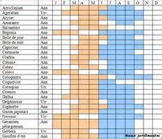 les plantes aromatiques calendrier de semis plantation