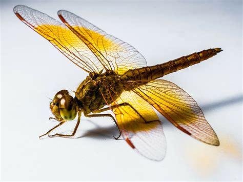 i see a dragonfly dragonfly guys books spirit animals dragonfly symbolism