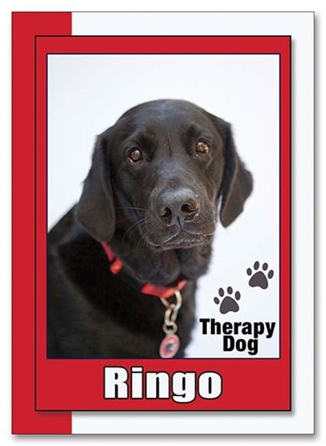 1000 trading cards custom k9 1000 images about therapy dogs canine on