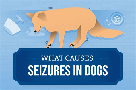 what causes dogs to seizures what causes seizures in dogs canna pet