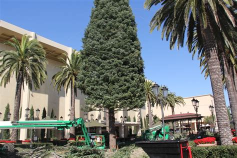 christmas light up in fashion island fashion island tree arrives in newport