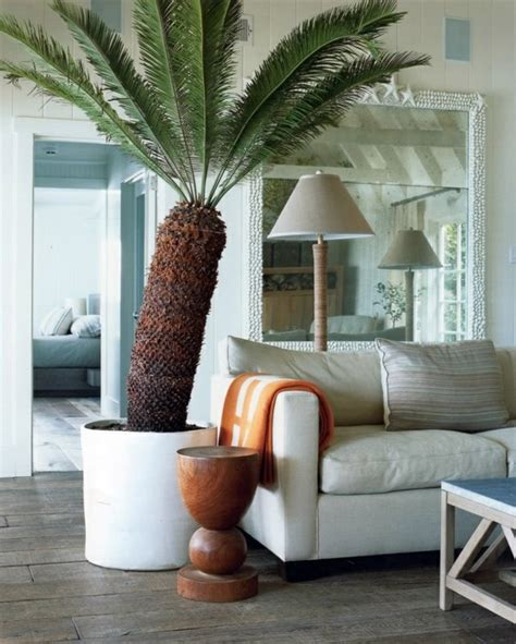 living room trees indoor palm images which are the typical types of palm