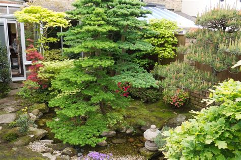 niwaki  favourite japanese syle garden   uk
