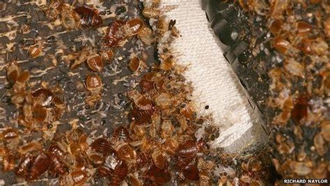 where do bed bugs come from originally where did bed bugs come from originally トコジラミ 南京虫 などの害虫駆除