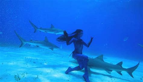 baby shark real life real life mermaid swims with sharks tries to save them