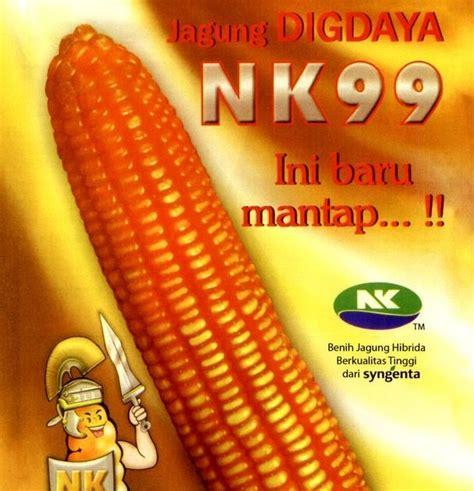 Benih Jagung Hibrida Pioner benih jagung hibrida jagung digdaya nk99