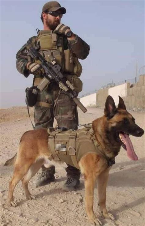 army dogs best 25 war dogs ideas on dogs animal heros and i salute you