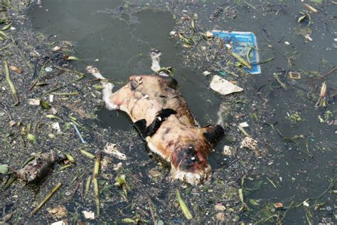 dead dogs animals dead dogs