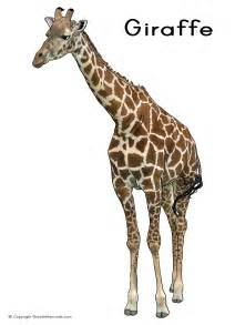 what color is a giraffe poster printing