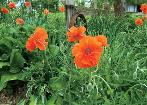 Perennial Planters by Perennial Plants For