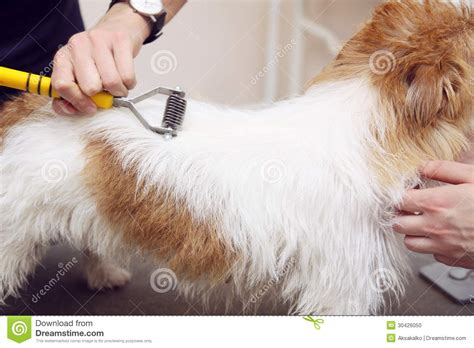haircut ideas for long hair jack russell dogs hair cut for long haired jack russell terrier paw print