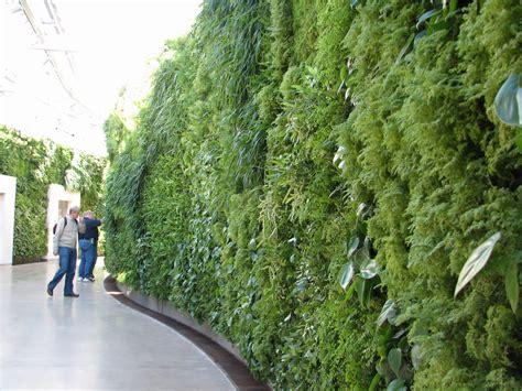 wall on vertical gardens green walls