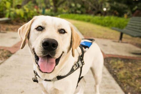 southeastern guide dogs southeastern guide dogs inc nonprofit in palmetto fl volunteer read reviews