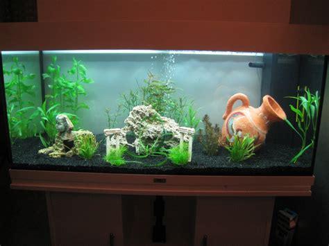 aquarium eau douce sans plante