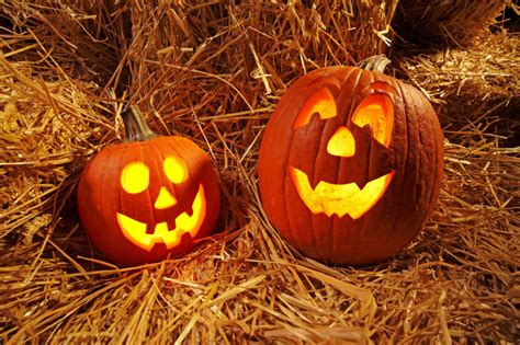 carved pumpkins for pumpkin carving tips for beginners zing by quicken