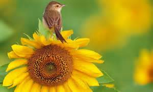 bird and sunflower awesome autumn pinterest