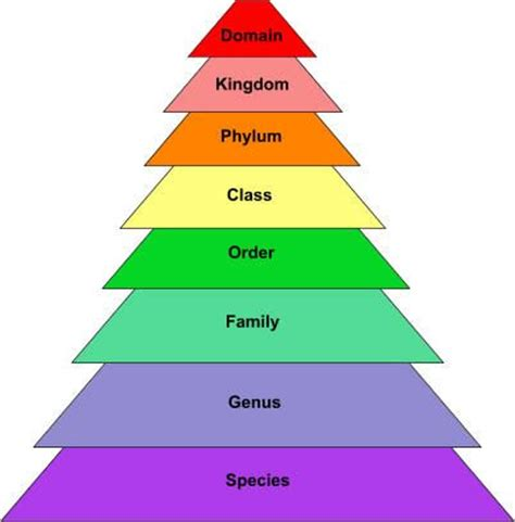 scientific taxonomy chart made easy charts diagrams discover more ideas about