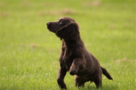puppy pees when excited why does my puppy when he s excited canna pet 174