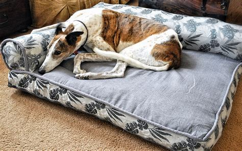 dog bed costco bolster beds at costco everything else greyhound greytalk