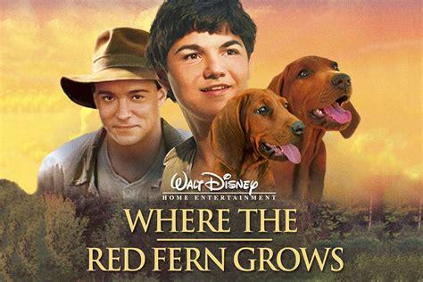 where the fern grows dogs where the fern grows mbc net