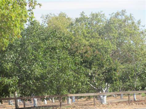 san jose botanical garden simon bolivar zoo and