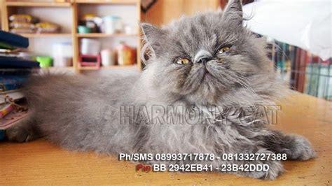 Jual Me O Kitten Kaskus jual kucing 200 ribu harga yos