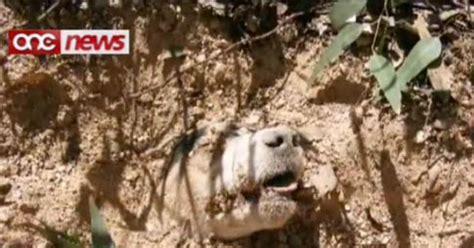 dog buried alive survives    pellets   head