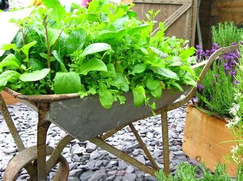 portable herb garden creative ideas for portable gardens the micro gardener