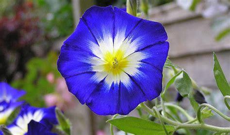 imagenes raras y bellas 15 de las flores mas hermosas del mundo