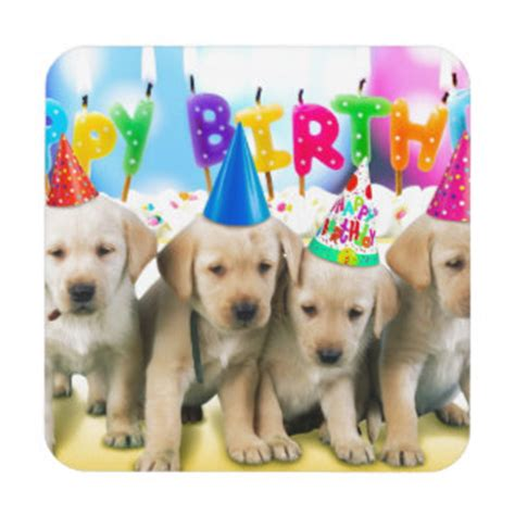 puppies happy birthday happy birthday puppy drink beverage coasters zazzle